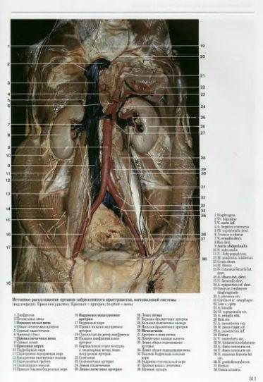 Сосуды органов малого таза